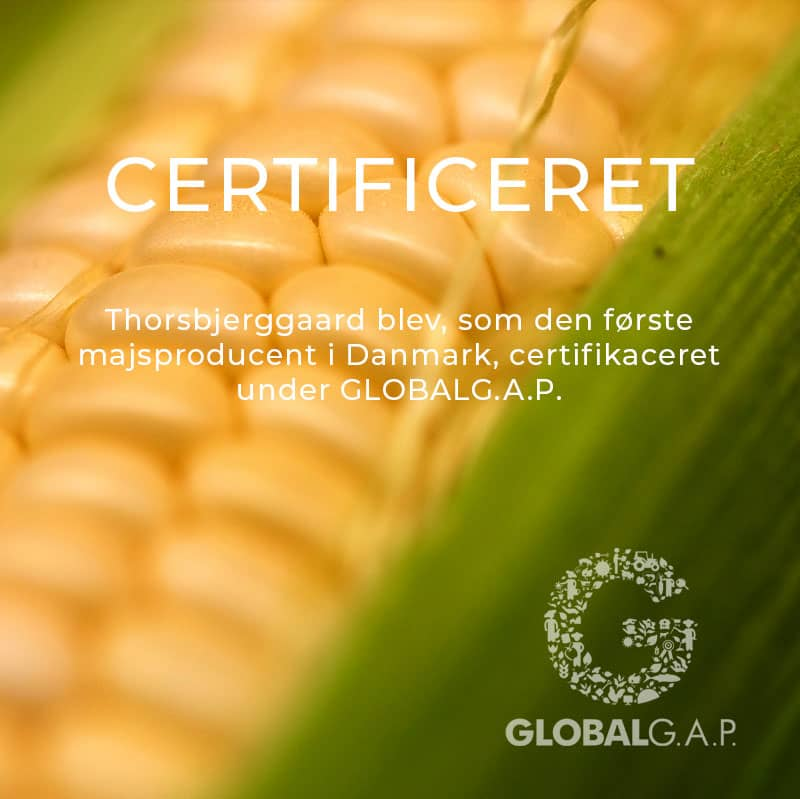 Thorsbjerggaard er certificeret under Global G.A.P.
